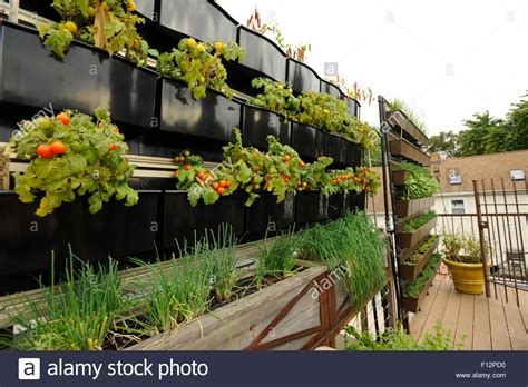 rooftop vegetable garden above restaurant in chicago