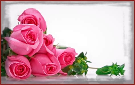 imagenes de rosas hermosas bellas imagenes de rosa related keywords bellas imagenes