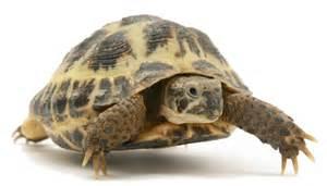 tortoise method breaking the time barrier