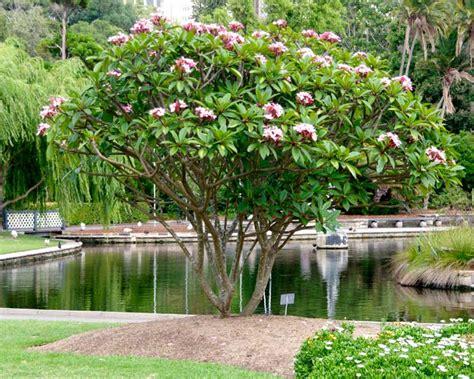 Types Of Garden Roses - gardensonline plumeria rubra