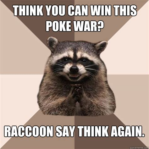 Raccoon Memes - think you can win this poke war raccoon say think again