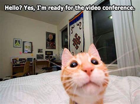 Cute Cat Memes - cute cat memes images reverse search