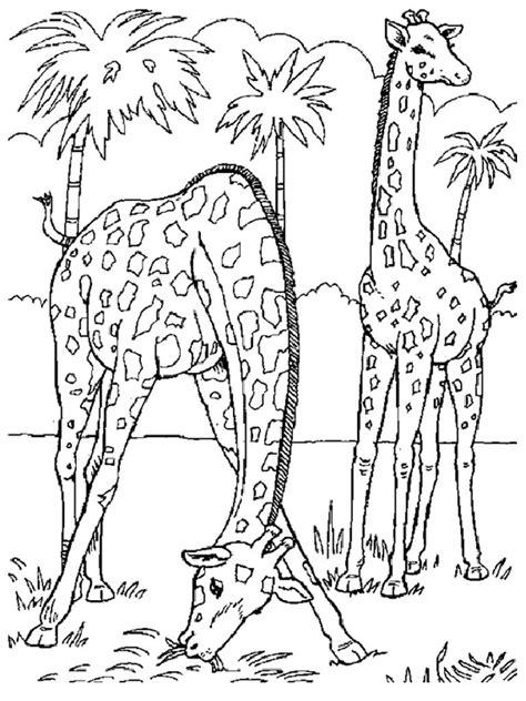 wild animals coloring pages preschool desenhos para pintar de animais selvagens desenhos para