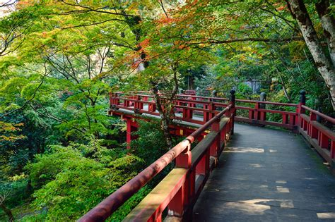 gambar pemandangan pohon menanam kayu jembatan daun