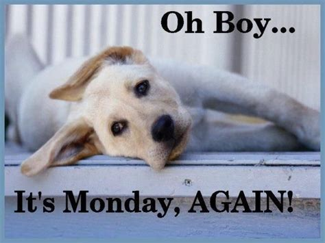i it s monday but oh no its monday quotes quotesgram