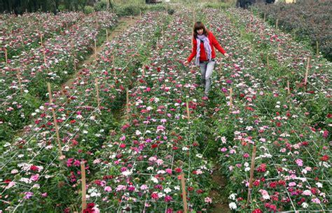 uscite autostrada dei fiori villaggi di fiori ad hanoi viaggi ad hanoi