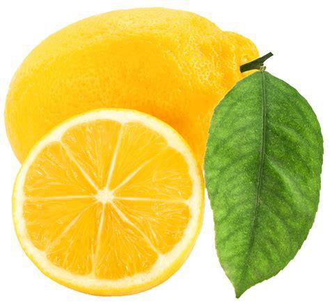 clipart graphics free free lemon clip pictures clipartix