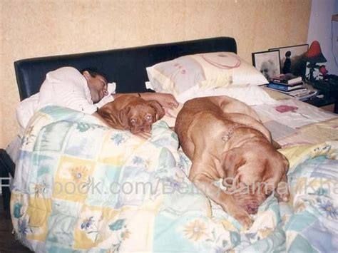 my had puppies and they all died picture salman khan s for his dogs filmibeat