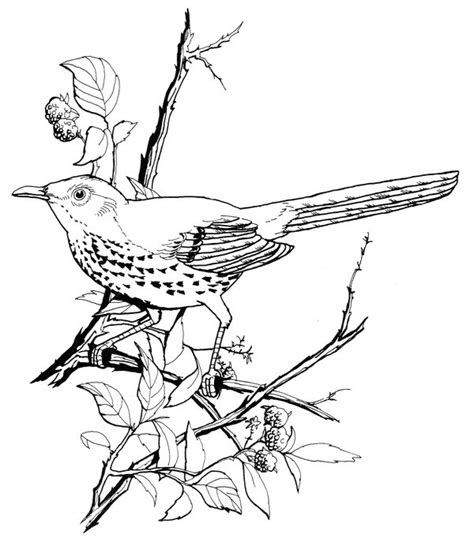 brown thrasher coloring page creativetherapytools