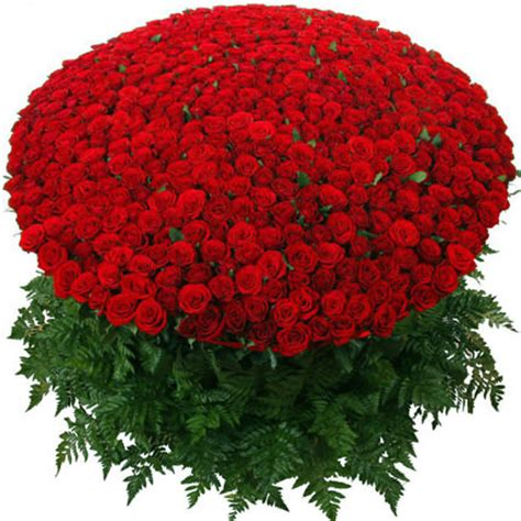 1000 roses buy 1000 roses order home delivery price