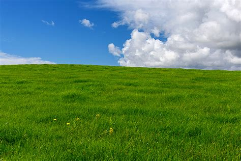 green green grass of home by halldoringi dpchallenge