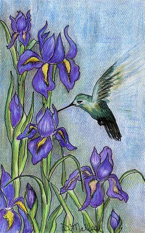 iris in the field drawing by dianne mallory