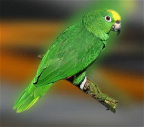 imagenes de loritos verdes image gallery loros