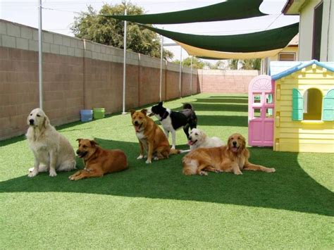 puppy day care 17 best ideas about pet resort on hotels that take dogs pet daycare and