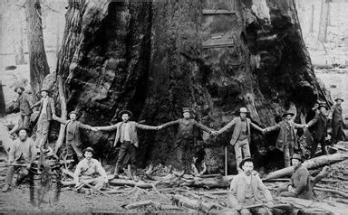 scfc history of forest industry forestry uw libraries