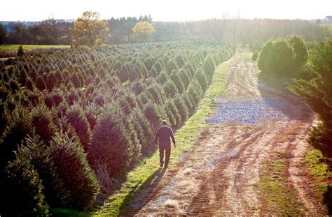 misty run tree farm lebanon s largest choose cut