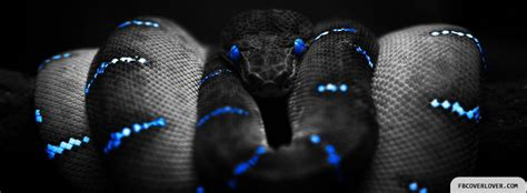 snake covers  facebook fbcoverlovercom