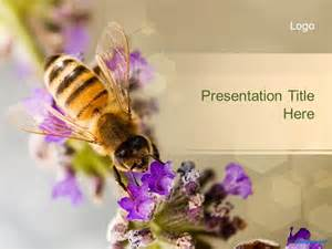 bee powerpoint template free animal ppt templates wildlife powerpoint slide designs