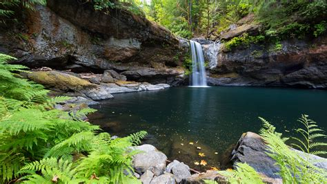 wallpaper coquille river falls waterfall oregon forest