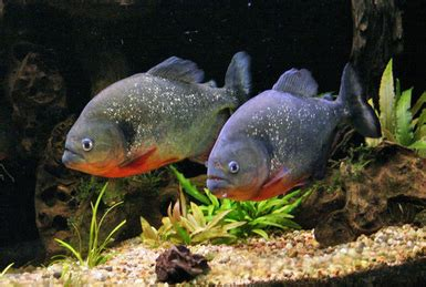 types of aquariums how to set up a tropical freshwater aquarium zozeen