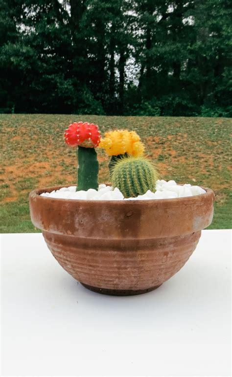 Cactus Garden Pot by Cactus Flower Pot Garden Carla Bethany