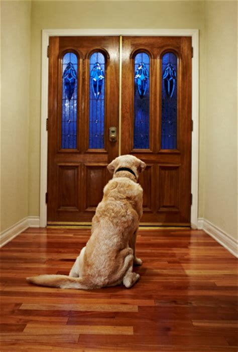 Waiting At Door waiting patiently at the front door stock photo getty images