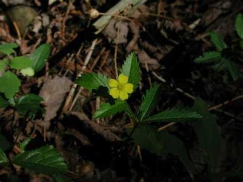 common plants  wisconsin