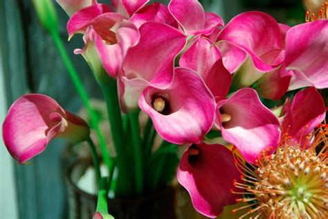 e fiori fiori e piante idea verde