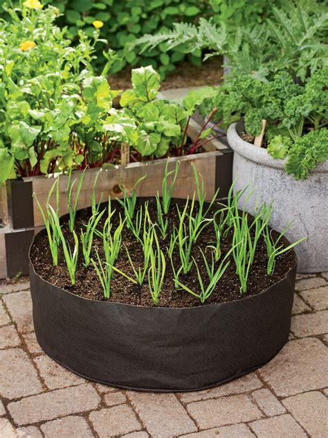 growing garlic   garlic grow bag kit gardenerscom