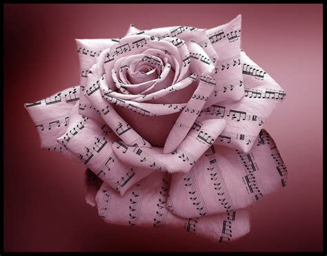 song roses are by donatocamino on deviantart