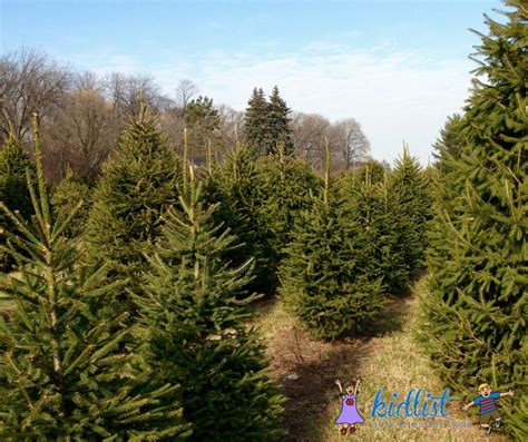 xmas tree farms covingtom trees where to cut your own or buy a pre cut tree