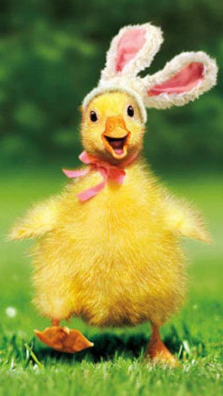 details  duckling bunny funny easter card greeting