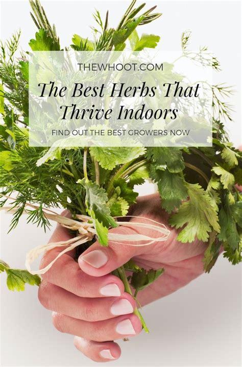 herbs  grow indoors  seeds video tutorial