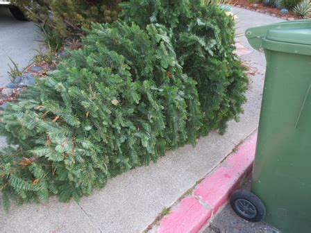ponzi christmas trees marin curbside tree recycling in marin county 2014