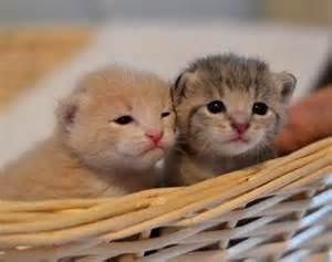newborn kittens newborn kittens what you should know step guide