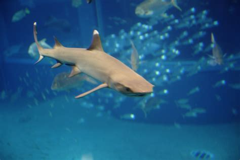 sharks house sharks house 28 images smooth hound shark feeding in aquarium concept design home