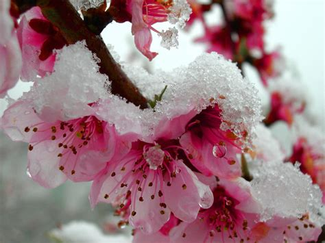 fiori di neve giardini