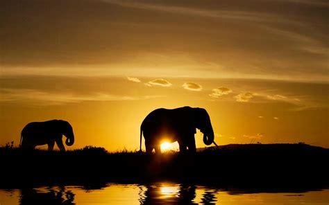 african animals wallpaper hd pixelstalknet