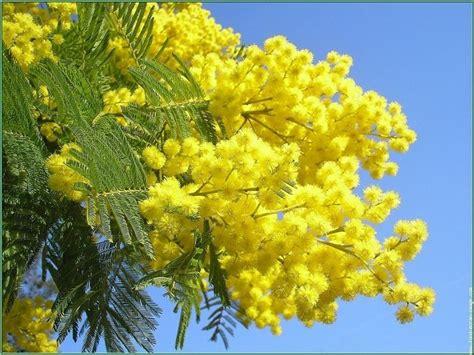 nomi di fiori comuni fiori gialli nomi piante perenni nomi dei fiori gialli