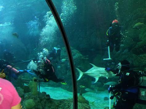 image gallery moody gardens aquarium