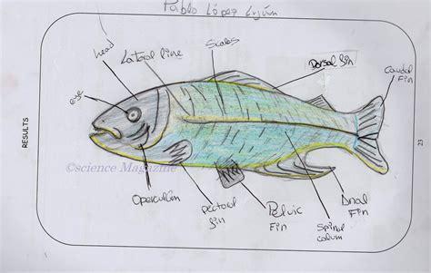 software for drawing scientific diagrams image gallery scientific diagram