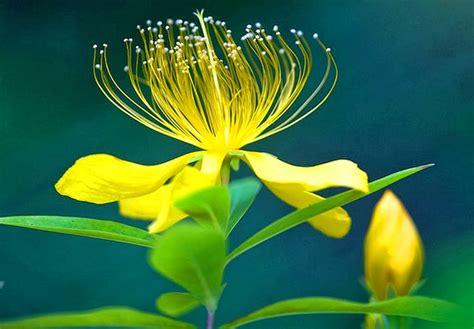wallpaper hd widescreen high quality desktop flower hd wallpapers 1080p widescreen flowers nice pics gallery