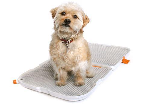 designboom dogs modko shake dog potty at new york design week 2013