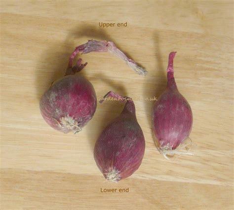 onion link rar reallola onion set related keywords reallola onion set