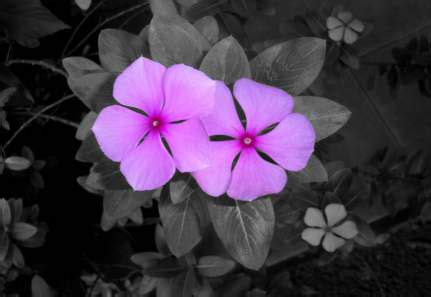 adding black to a color adding color to a black white photos in paintshop pro