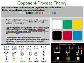 opponent process theory of color vision psych ms shirley unit 2 sensation perception vision
