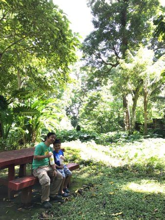 Uplb Botanical Garden Makiling Botanic Gardens Los Banos Philippines Updated 2018 Top Tips Before You Go With