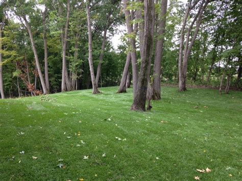 backyard woods o donnell woods model in nih