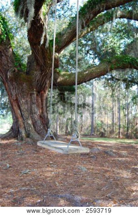 oak tree swing old oak tree tree swing 101 image photo bigstock