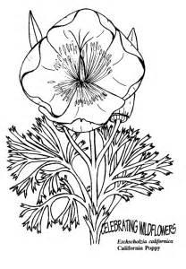 file eschscholzia californica california poppy gif